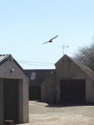 bat over the yard_400